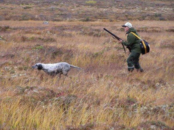 На западе Крыма пройдут соревнования легавых собак